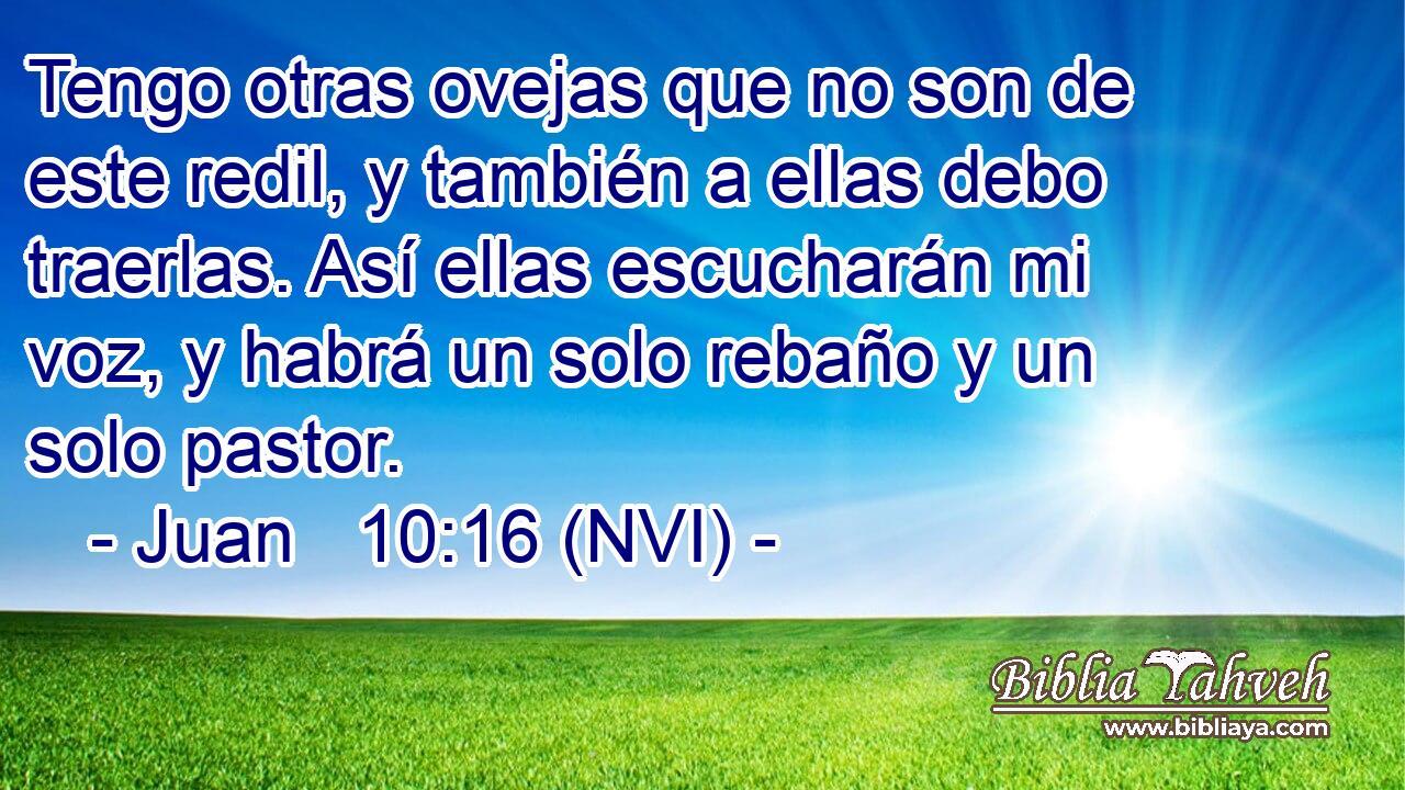 Juan 10:16 (nvi) - Tengo otras ovejas que no son de este redil,...